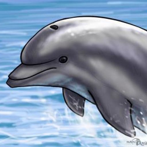 How To Draw Dolphins