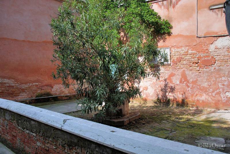 Corte S Andrea 6
