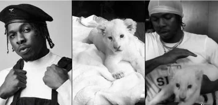 Runtown Acquires A White Baby Lion As A Pet (Photo+Video)