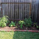 Gardening 2011 - 100_7800.JPG