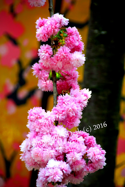 Small pink cluster blossoms
