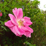 Gardening 2014 - 116_6265.JPG