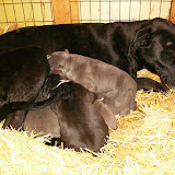 Star & True Blues February 21, 2008 Litter - HPIM0942.JPG