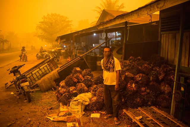 A man stands before a pile of oil palm fresh fruit bunches at the height of last the 2015 fire and haze crisis in the Central Kalimantan city of Palangkaraya, Indonesia, one of the hardest hit by the disaster. The orange color is real. Photo: Bjorn Vaughn