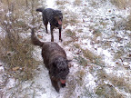 Jack and Django showing off their fresh coats of snow.