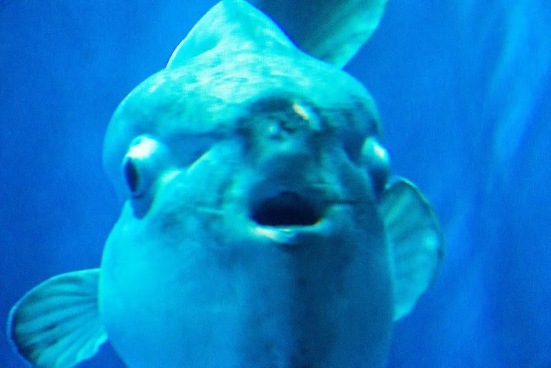 アクアワールド大洗水族館 写真9