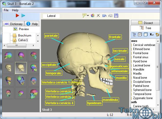 BoneLab 2 v2.3.36 3D Full