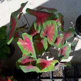Gardening 2010, Part Three - 101_5137.JPG