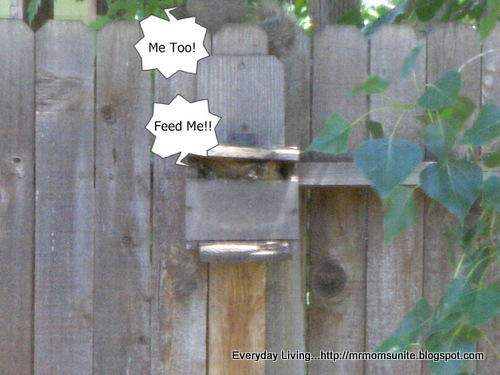 Photo of two squirrels eating at the feeder with one inside the feeder