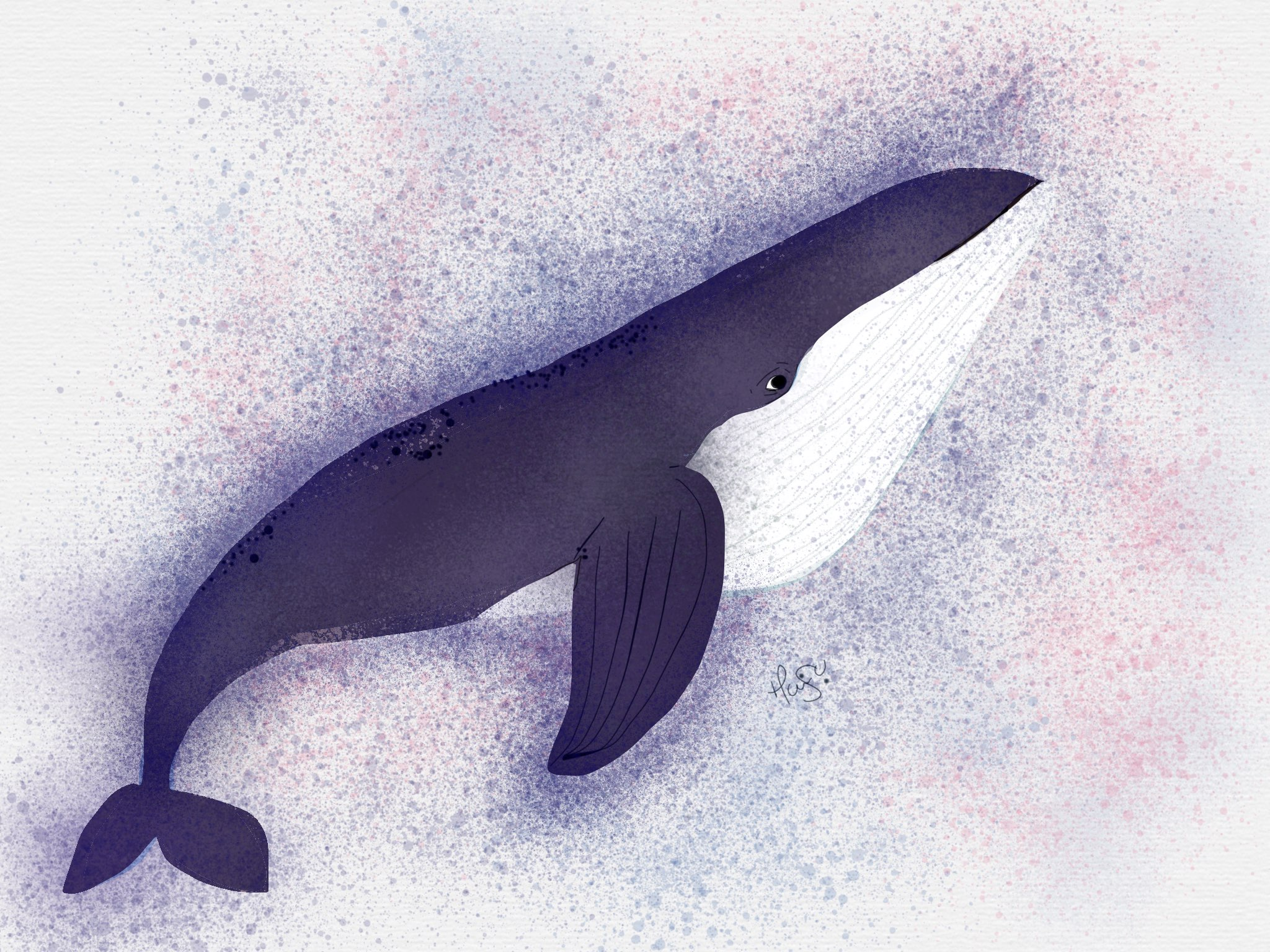 whale made with Sketches