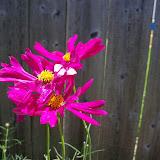 Gardening 2010, Part Three - 101_4381.JPG