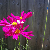 Gardening 2010, Part Three - 101_4381.JPG