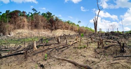 ΟΗΕ : Μόνο με ταχεία και εκτεταμένη αποκατάσταση της φύσης η Γη μπορεί να σωθεί