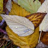 raspberry-leaf_MG_2270-copy.jpg