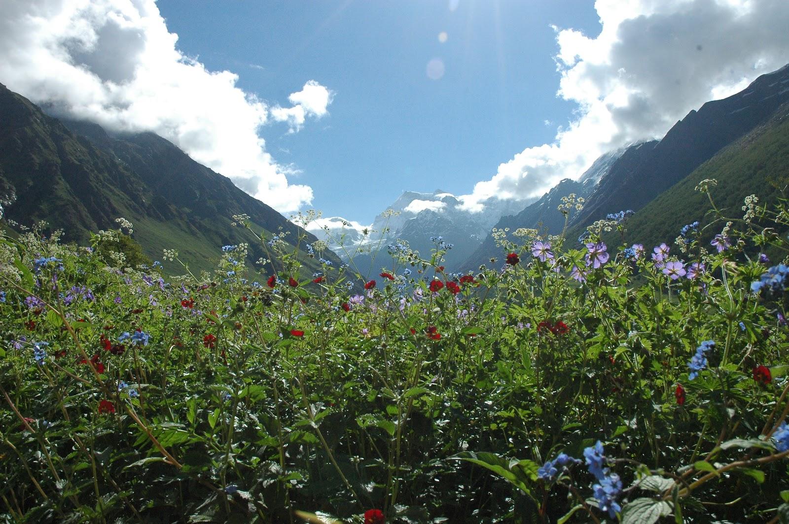savaari-stunning-landscape-amidst-toweing-himalayas