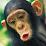Pablo Santistevan's profile photo