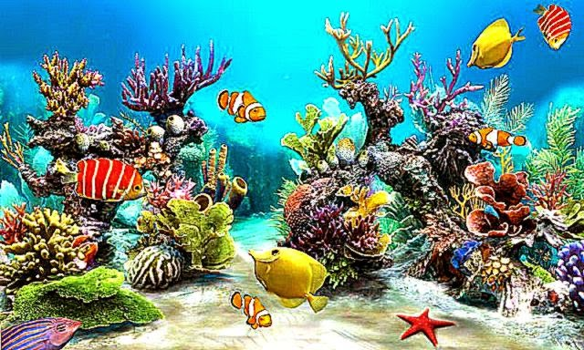 Sim Aquarium Live Wallpaper   Android Apps on Google Play