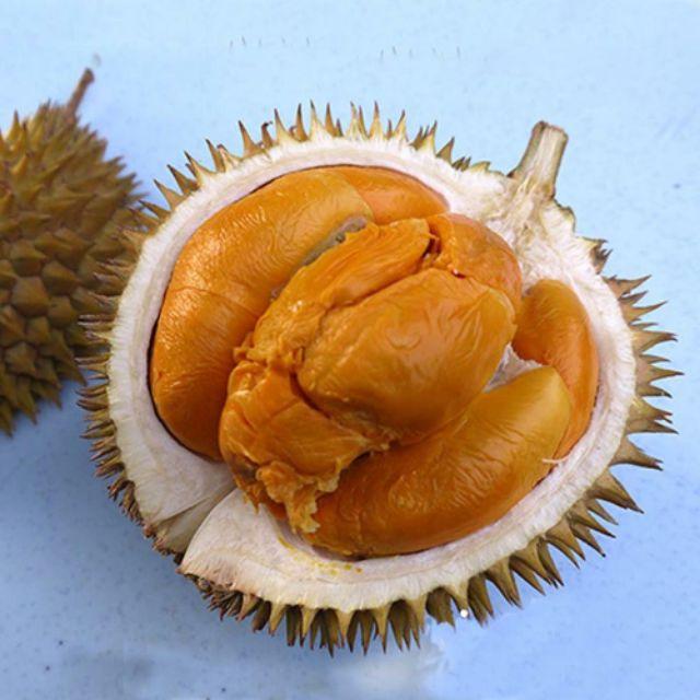 Durian black thorn malaysia