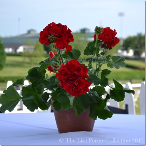 High Hope Steeplechase 2015 | Photo The Lisa Porter Collection