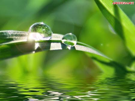 20 hình ảnh giọt nước rơi tuyệt đẹp lung linh kỳ diệu
