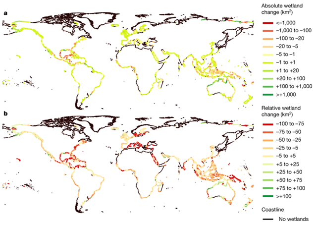Spatial distribution of coastal wetland change by the year 2100 under sea level rise from global warming. Graphic: Schuerch, et al., 2018 / Nature