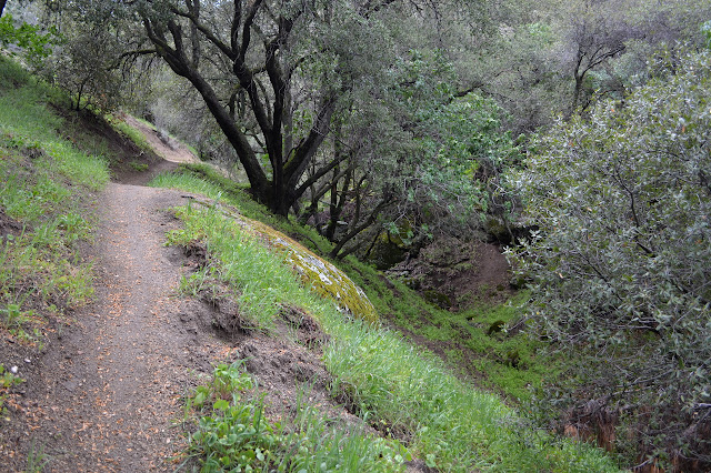 sandy dirt trail along the side of a dry gulch