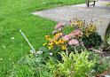 TopfpflanzenIMG_0698.JPG