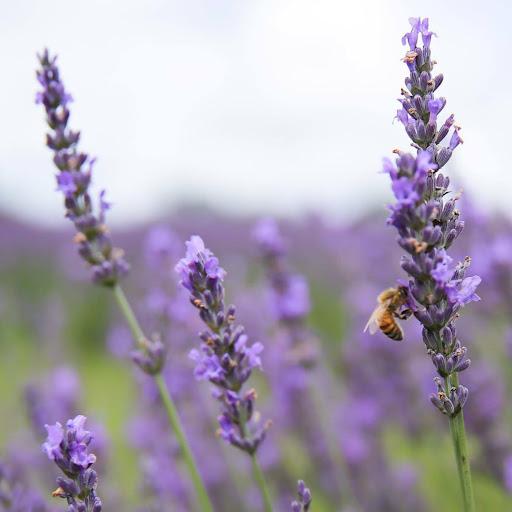 Lucy Xie Photo 20