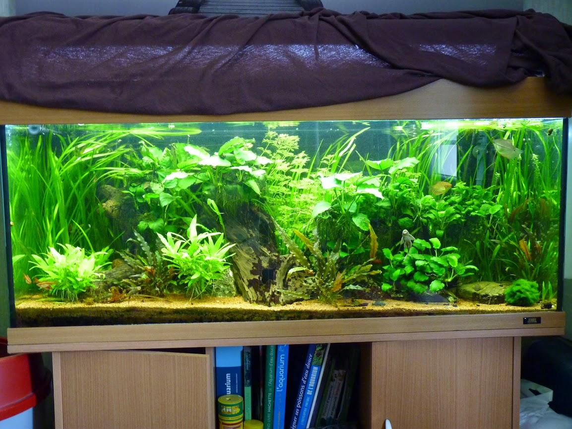 Ma petit histoire Aquariophile de 2009 à aujourd'hui  P1060159
