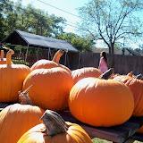 Pumpkin Patch 2014 - 116_4417.JPG