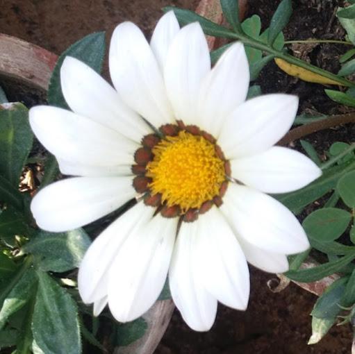 user Daniyal shaikh apkdeer profile image
