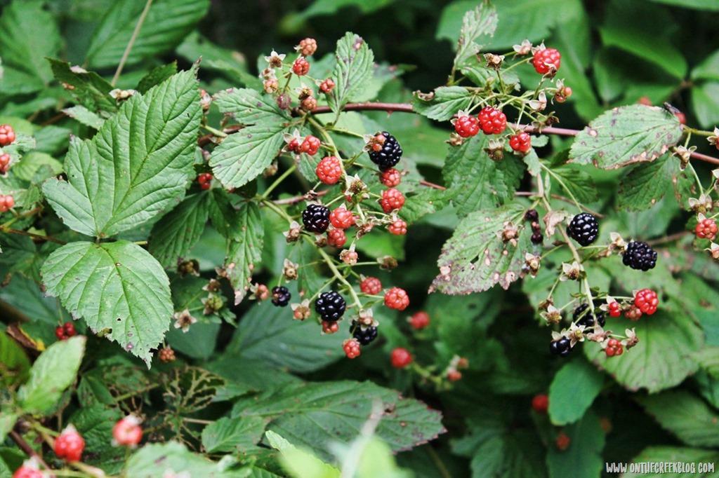 [blackberries2%5B7%5D]