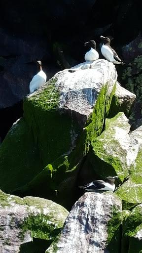 Birds of all kinds on Puffin Island, Witless Bay Ecological Reserve, Newfoundland