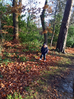 walking in the woods with my boy