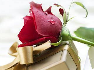 Une relation c'est des disputes, de la confiance, des larmes, de la patience, de la jalousie, de la complicité et de l'amour.