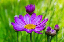 w_2015-05-EOS6D-0361