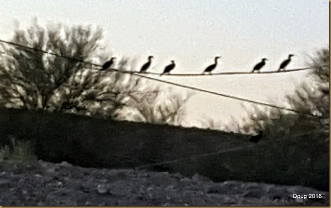 Egrets on a highwire