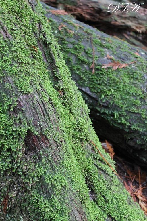 Whistler Lynn Canyon Stanley Park 102