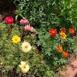 Gardening 2010, Part Two - 101_2749.JPG