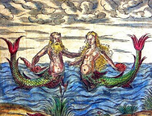 Mermaid Body Found In Search Of Folk With Fins