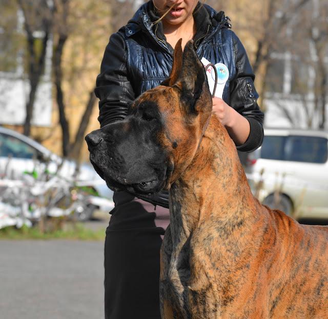Кубок Аризоны-14(ПК)+ЧРКФ, Красноярск, 27 апреля 2014 DSC_5826
