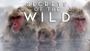 Secrets of the Wild thumbnail