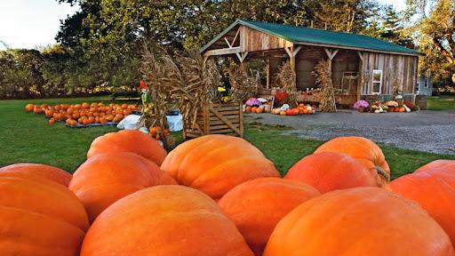 Roadside Pumpkin Stand, Indiana.jpg