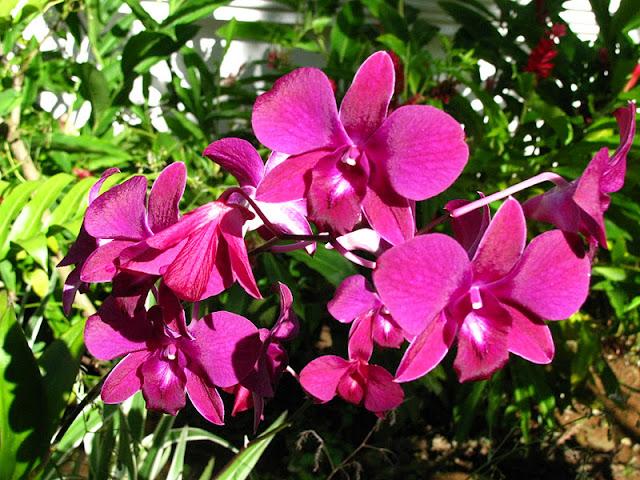 Из зимы в лето. Филиппины 2011 - Страница 7 IMG_0029%252520%2525287%252529