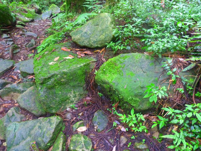 Petite randonnée au sud de Taufen, dans la région de Miaoli - P1330637.JPG
