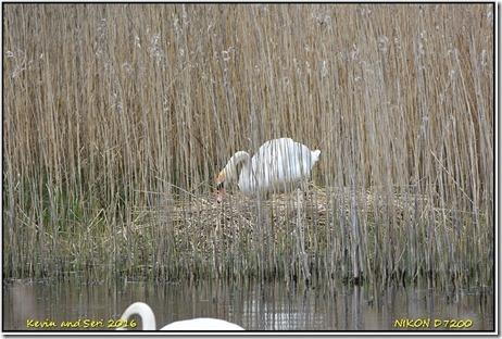 Farmoor Reservoir - April
