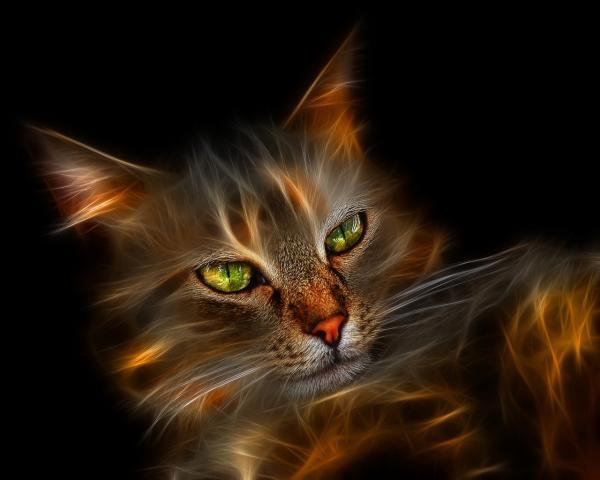 Mystical Friend, Magic Animals 1