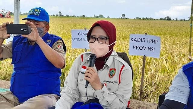 Memuaskan, Petani Katingan Kuala Panen Raya Padi