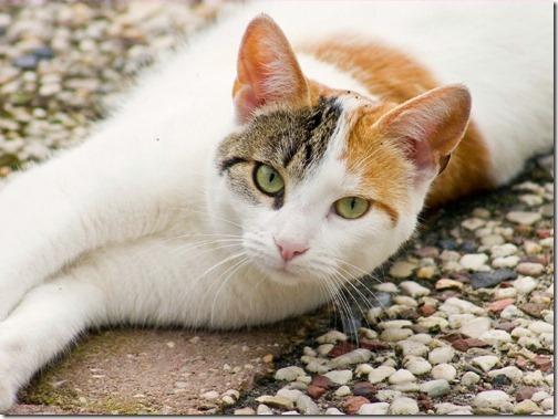 fotos de gatos (10)