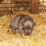 Star & True Blues February 21, 2008 Litter - HPIM0998.JPG